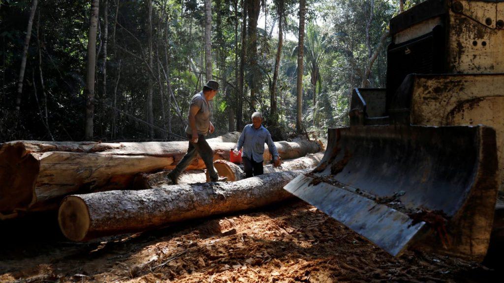 Foresta pluviale: la Cina investe 15 miliardi di dollari in società di disboscamento illegali - politica estera