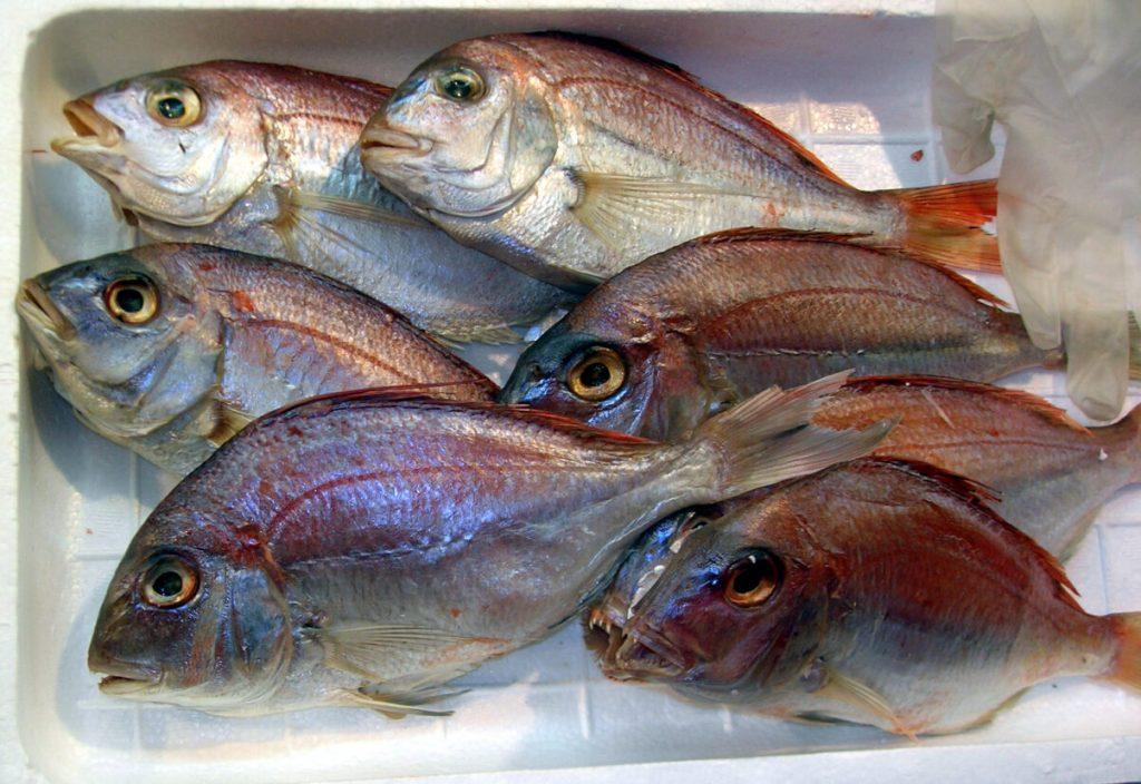 Un'azienda giapponese vuole immettere sul mercato pesce modificato con genoma